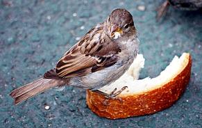 bird toast