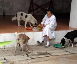 A female monk feeding the dogs at temple.