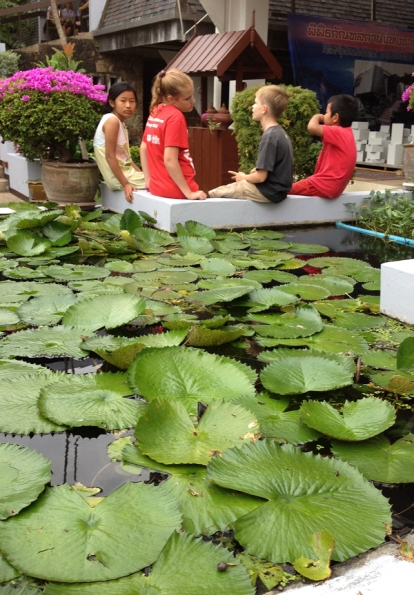 A serious discussion by the lily pads.